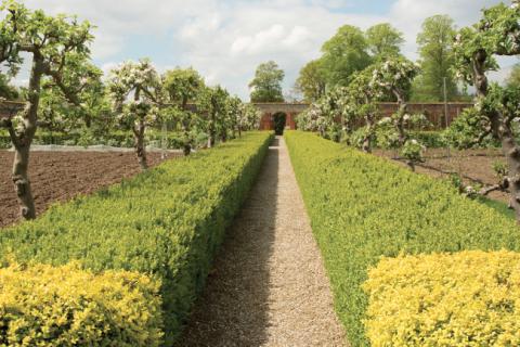 Ravingham Gardens
