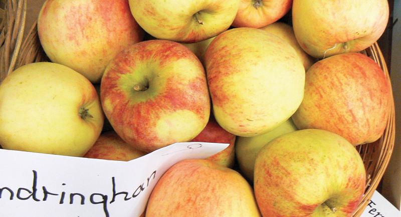 Apple Day Norfolk Suffolk
