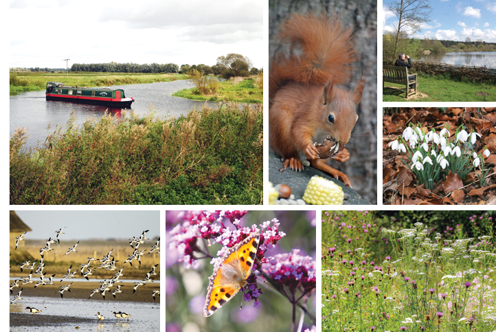 Suffolk Norfolk Life magazine nature wildlife and countryside East Anglia